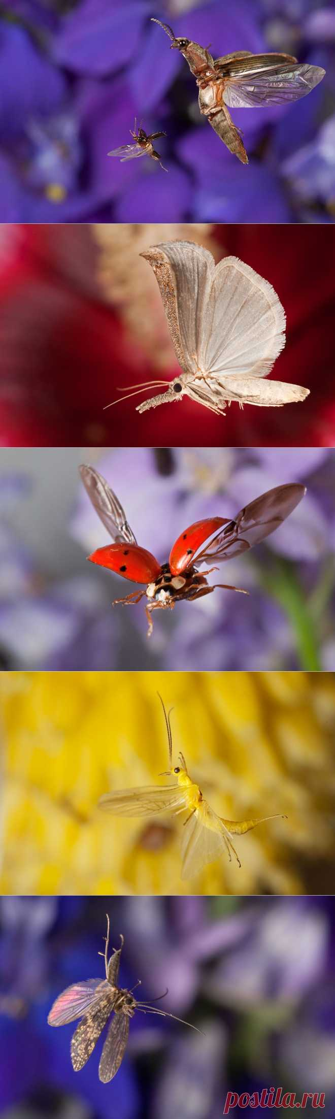 Insects in flight | Naked Science