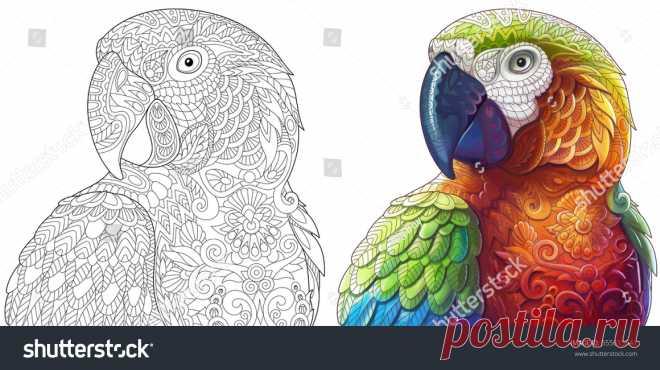 Animales Coloridos: vectores, imágenes y arte vectorial de stock   Shutterstock