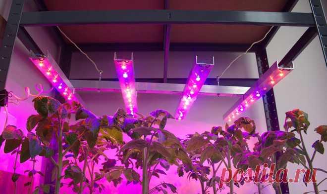 Искусственное освещение для растений - отвечаем на вопросы