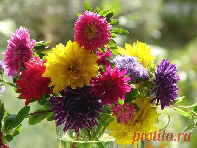 ОСЕННИЕ ЦВЕТЫ... | Цветы осенние и стихи | СТИХИ, Цитаты, Поздравления |  Постила