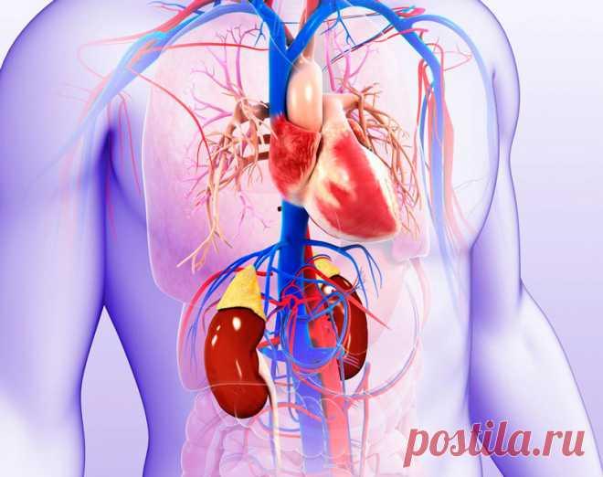 Лучшие продукты для здоровья сердца Укрепить здоровье сердечно-сосудистой системы можно с помощью пищевого рациона. Некоторые продукты питания просто необходимы для нормальной кардио функции. Если систематически употреблять помидоры, чеснок, ягоды и некоторые другие продукты, это поддержит вашу сердечно-сосудистую систему.
