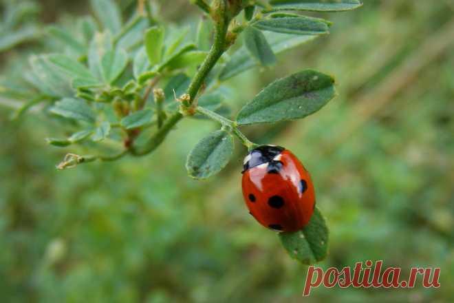 14 самых полезных насекомых вашего сада. Описание и фото — Ботаничка.ru
