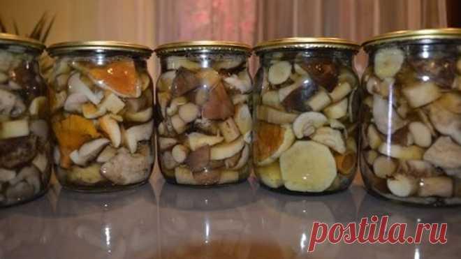 Маринованные грибы гифка