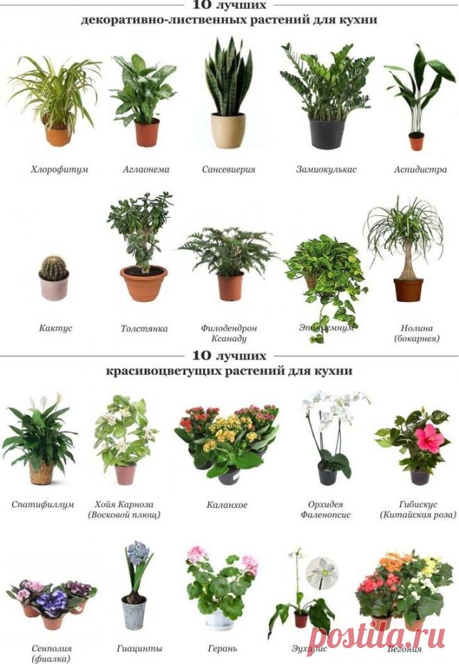 картинка и названия комнатных растений и цветов в интернет магазине больше