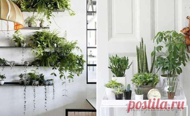 9 крутых растений для дома и как за ними правильно ухаживать