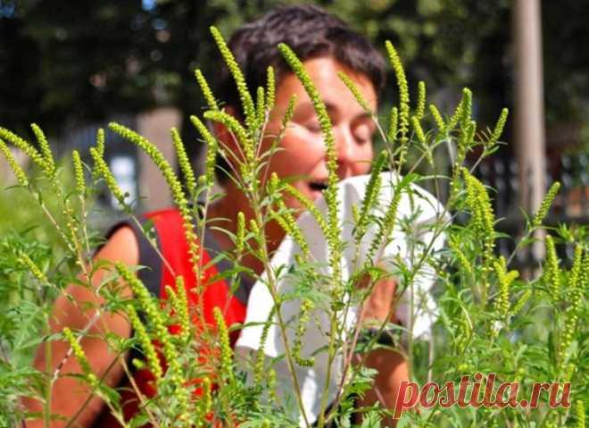Аллергия — тяжело с ней жить. Кто болеет, знает. 8 рецептов справиться с разными видами болезни и жить свободно! - Образованная Сова