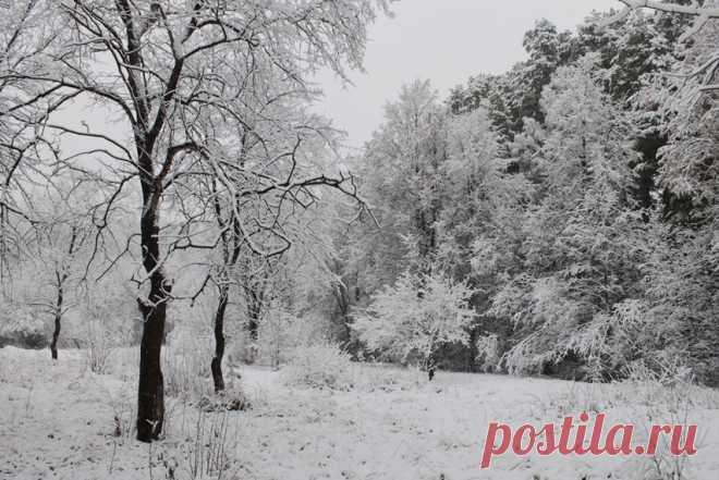 В любимом парке - первый снег...