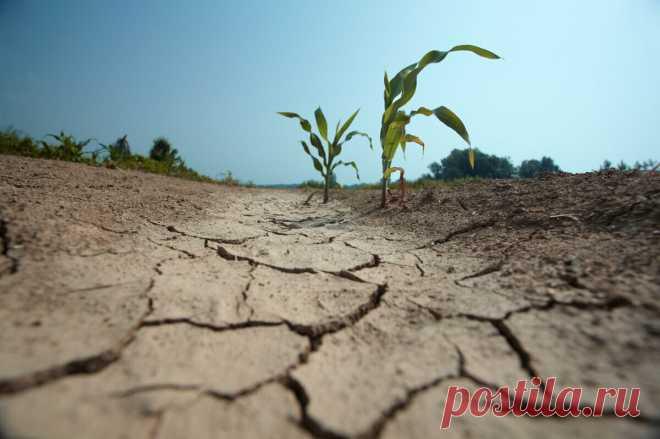 5 признаков уставшей земли, но все еще можно исправить | посуДАЧИм об огороде | Яндекс Дзен