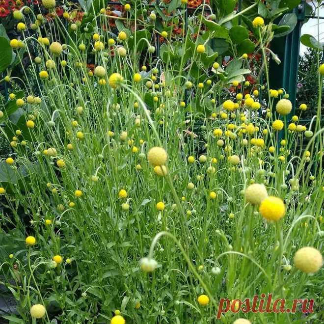 9 необычных растений для вашего участка, которые НЕ РАСТУТ У СОСЕДЕЙ | 6 соток