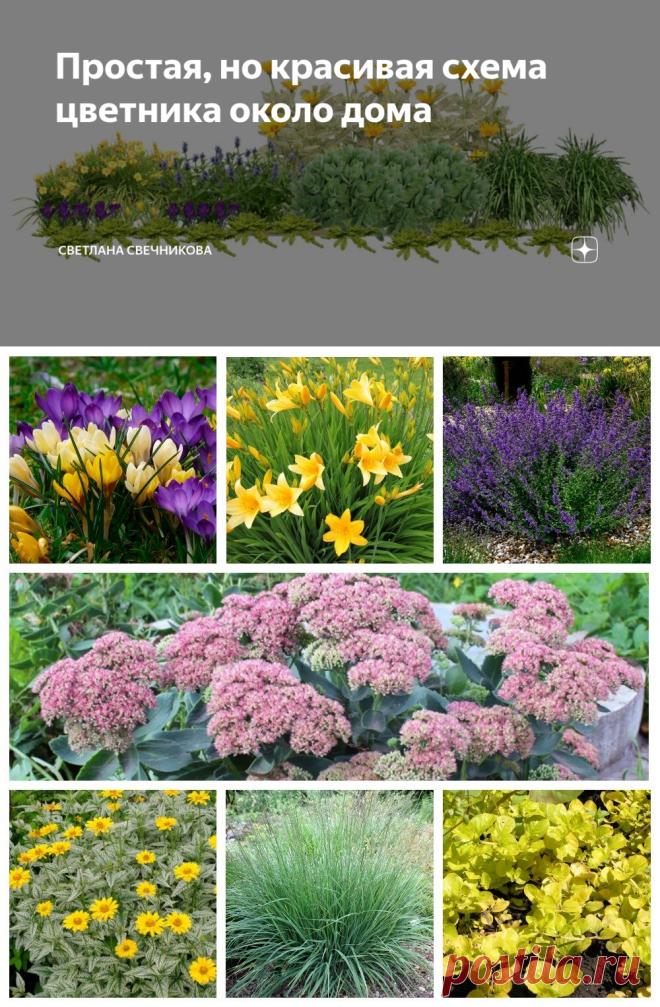 Простая, но красивая схема цветника около дома | Светлана Свечникова | Яндекс Дзен