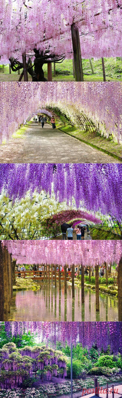 Ботанический сад Кавати Фудзи в японском городе Китакюсю