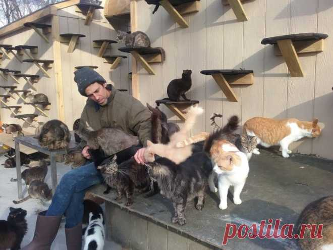 58-летний мужчина живет в окружении 300 кошек . Чёрт побери