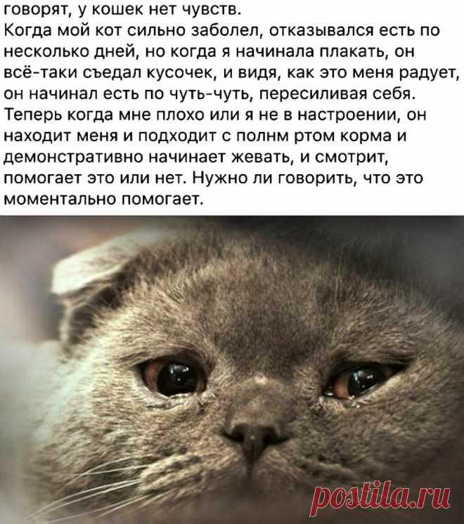 Мы не заслуживаем животных