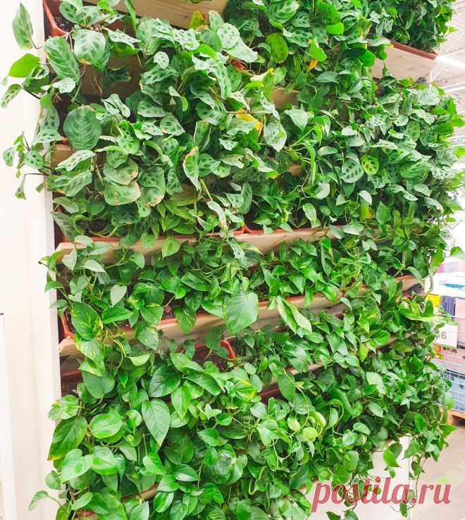 Рассказываю 3 способа как освободить место для новых растений в доме и освежить интерьер | Антон - цветочник | Яндекс Дзен