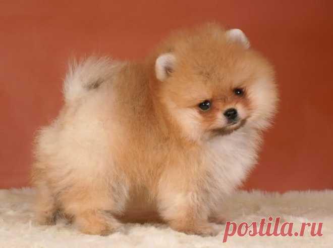 «симпатичный щенок » — карточка пользователя laura-4591 в Яндекс.Коллекциях