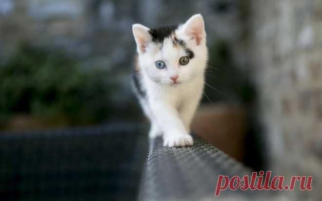 Котики для души