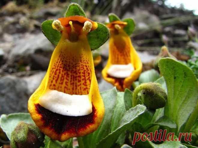 отзывах перед фото самые удивительные цветы мира сми раскрывают подробности
