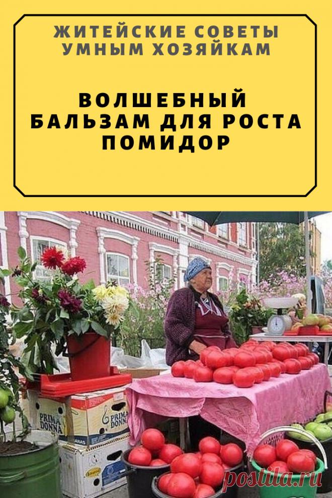 Волшебный бальзам для роста помидор   Житейские Советы