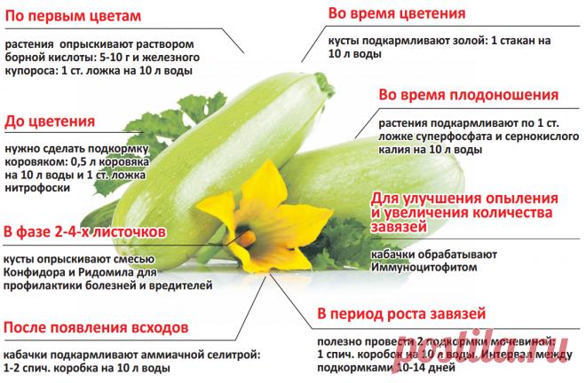 Уход за кабачками по этапам роста