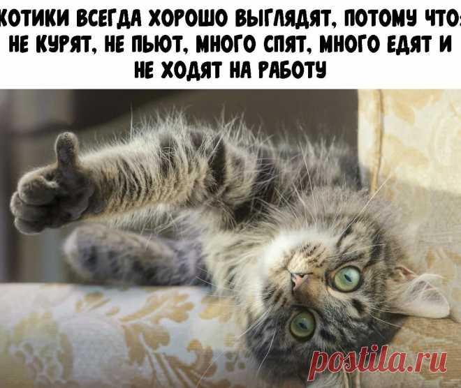 ребенок оплакивает питомца: 1 тыс изображений найдено в Яндекс.Картинках