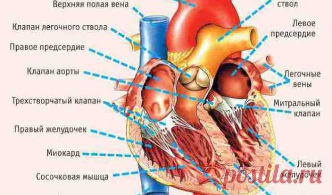 9 признаков надвигающегося приступа: как понять, что у вас проблемы с сердцем? — Мир интересного