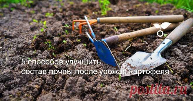5 способов улучшить состав почвы после урожая картофеля В восстановлении почвы нет ничего сложного. Природе нужно просто немного помочь – хорошенько напитать землю. И можно смело рассчитывать на добротный урожай.