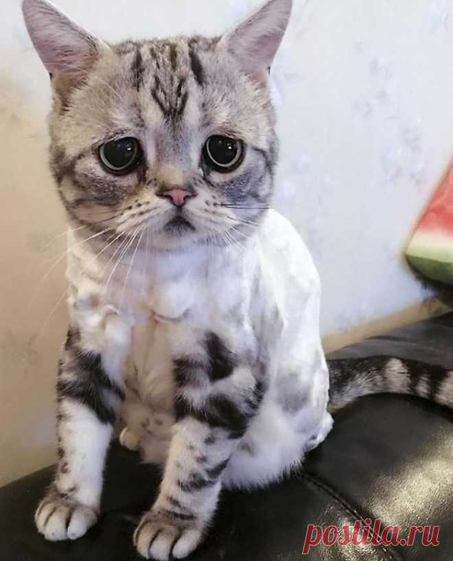 sad cat Create your own images with the sad cat meme generator.