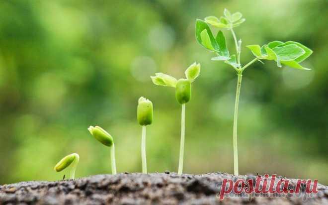 13 легких способов ускорить прорастание семян Причин плохой всхожести семян может быть множество – их возраст, толстая оболочка, препятствующие набуханию эфирные масла, сниженный иммунитет и т.п. К счастью, огородники давно изобрели собственные л...