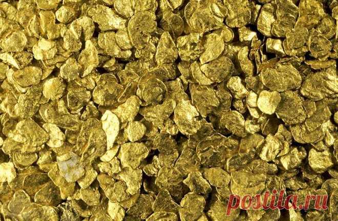 В Австралии биологи обнаружили золотоносные грибы