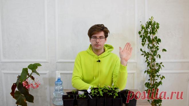 Пикировка перцев: мастер-класс от агронома. Видео — Ботаничка.ru