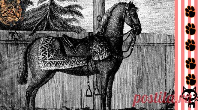 Лизетта, еще раз Лизетта, пес Тиран и кот Васька, - домашние животные российского императора Петра I   Пушистые  новости от Шерхана   Яндекс Дзен