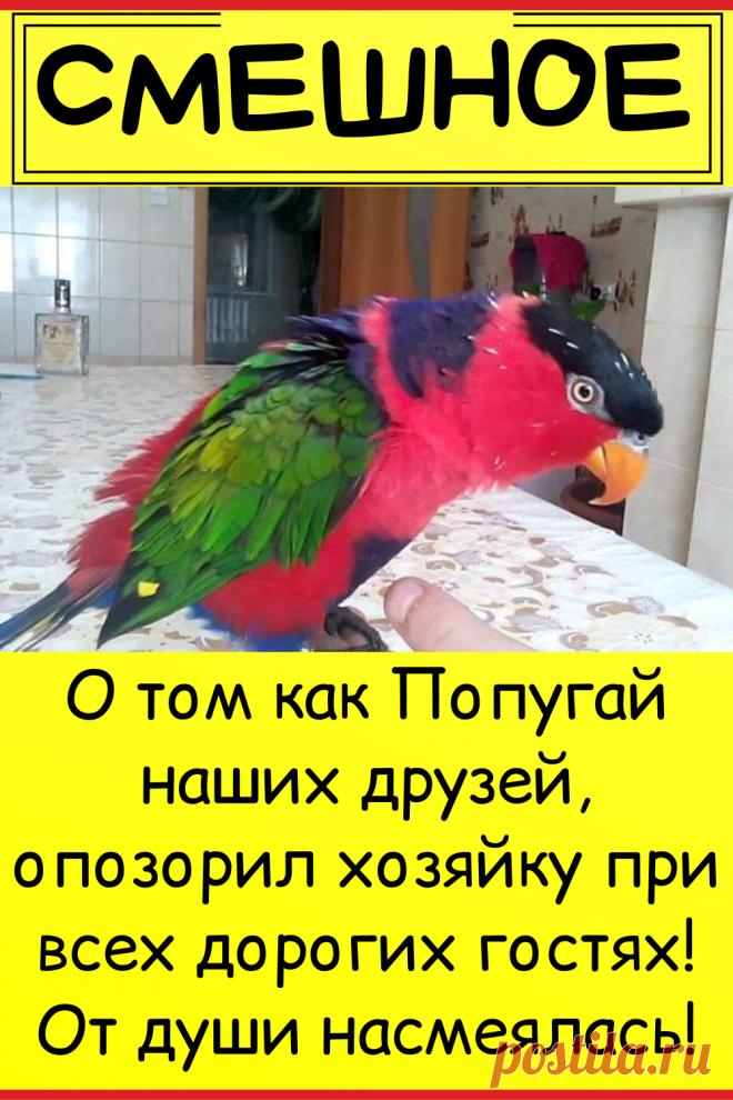 О том как Попугай наших друзей, опозорил хозяйку при всех дорогих гостях! От души насмеялась!