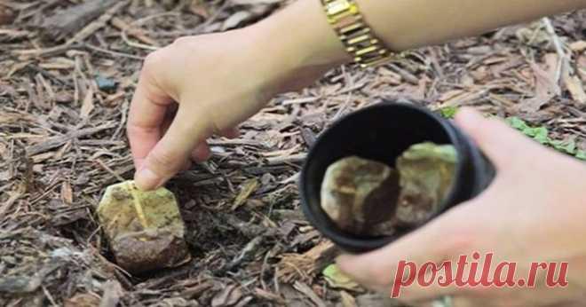 Не выбрасывайте чайные пакетики. Вот 10 причин, почему вы должны посадить их в землю   Мир вокруг нас