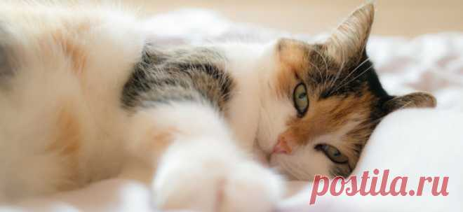 Как заставить кошку спать по ночам | PetTips
