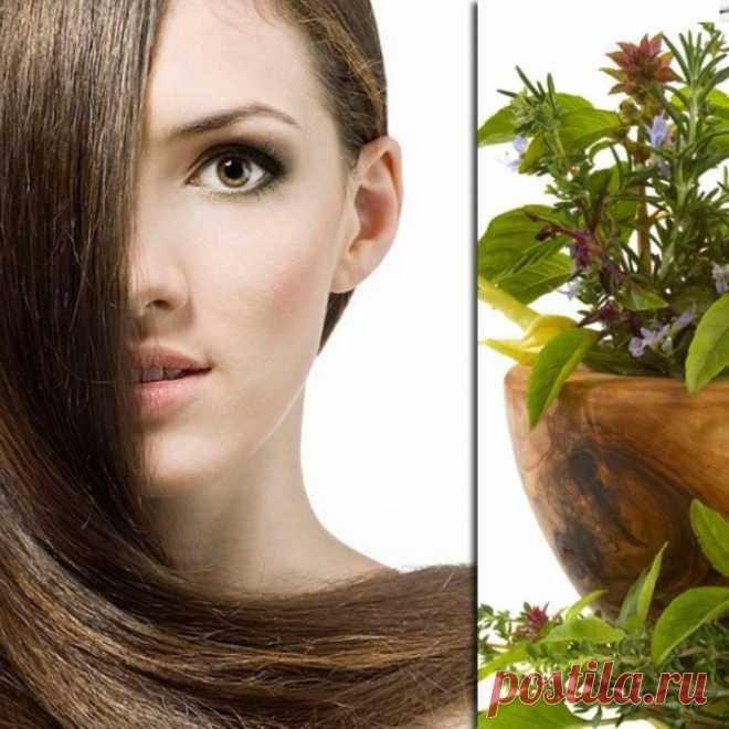 Лечим волосы растениями