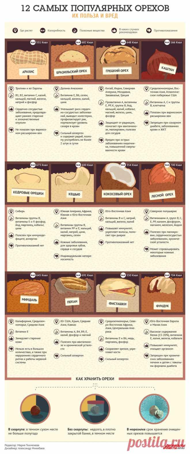 12 самых популярных орехов: их польза и вред. Инфографика - Продукты и напитки - Кухня - Аргументы и Факты