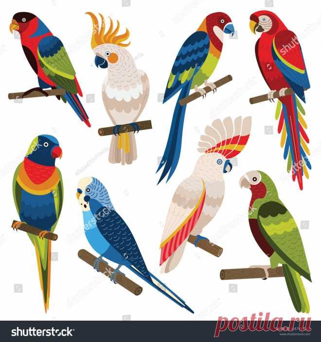 Papagayos Coloridos: vectores, imágenes y arte vectorial de stock | Shutterstock