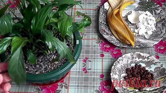 Абсолютно натуральное удобрение для растений! Поможет ОЖИВИТЬ самый ЧАХЛЫЙ