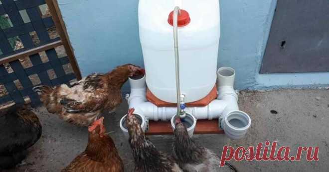 Автоматическая поилка для домашней птицы: из ПВХ труб и канистры Пользоваться автоматической поилкой очень удобно — налил в емкость воды, и несколько дней можно к ней не подходить.  Обратите внимание: чем вместительнее будет емкость, тем на большее время хватит запаса воды.  В сегодняшней статье мы рассмотрим один