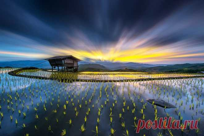 500px / Свет в рисе. по Sarawut Intarob