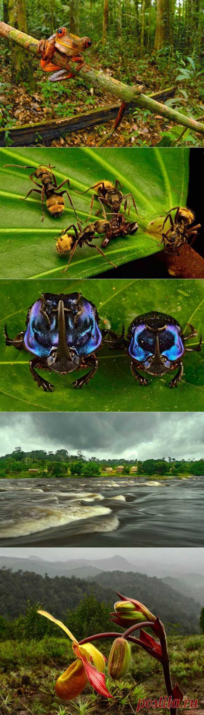 >> Редкие растения и существа Южной Америки | ФОТО НОВОСТИ
