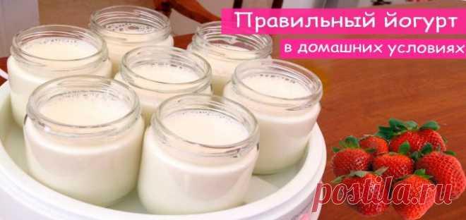 Простые рецепты йогурта в домашних условиях. — Полезные советы