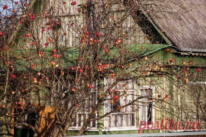 Чем удобрять сад осенью   — Садоводка