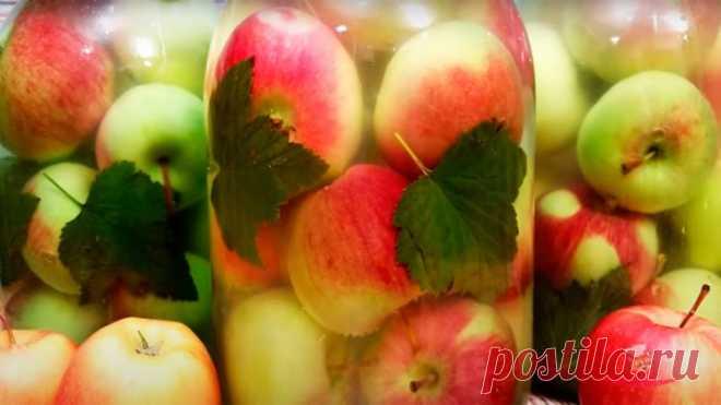 Моченые яблоки - Лучший сайт кулинарии