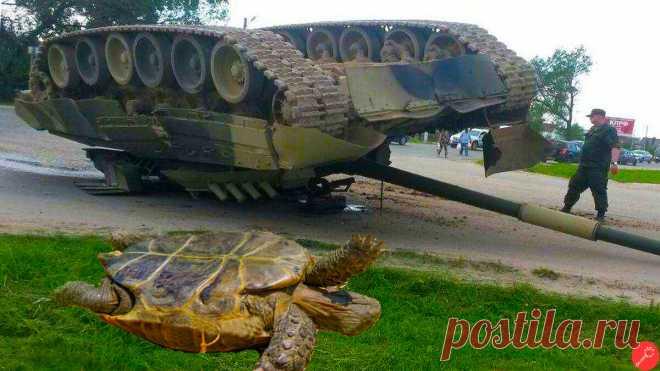 """Тест: """"Сможете ли вы определить, какой танк решил полежать вверх гусеницами?"""" Всего 8 вопросов   Военное Время   Яндекс Дзен"""