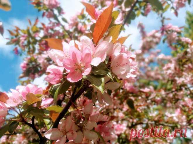 Яблоки в вышивке. Празднуем богатый урожай! | Вышивка и акварель | Яндекс Дзен