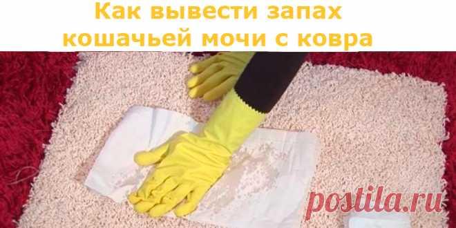 Как вывести запах кошачьей мочи с ковра | Полезные советы