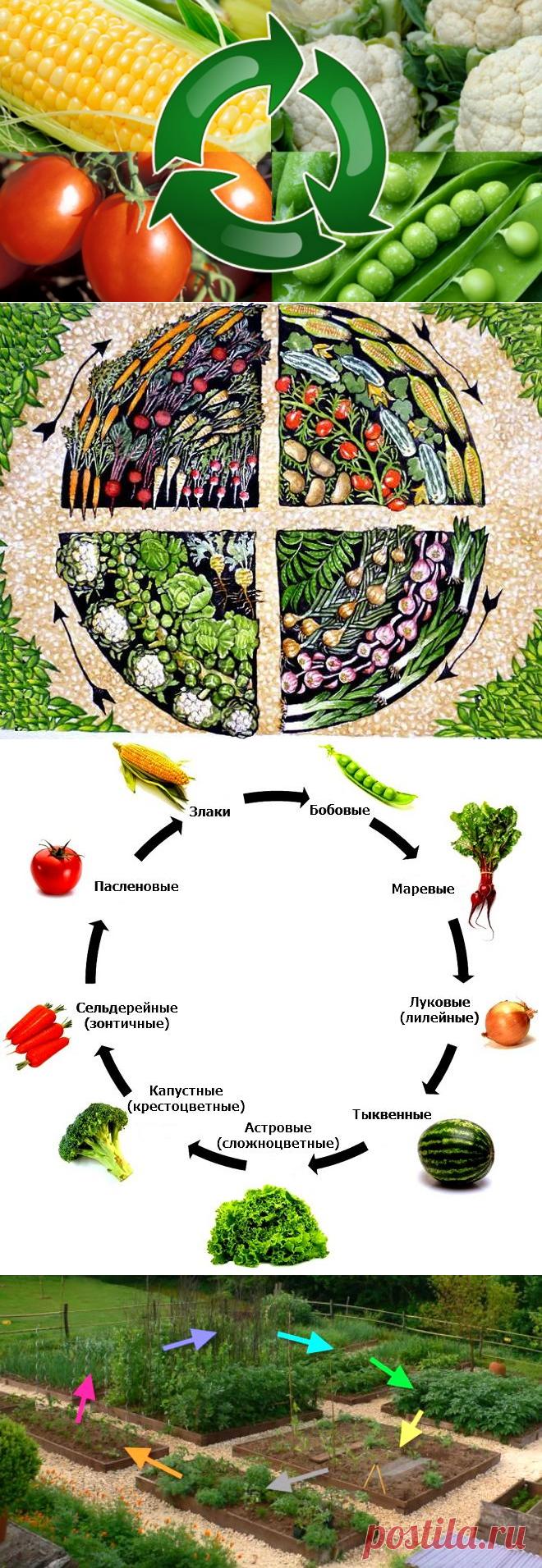 Севооборот, или Что после чего сажать в огороде | Дела огородные (Огород.ru)✔