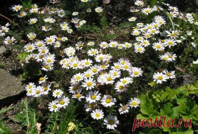 10 растений, которые прекрасно растут даже в бедной почве