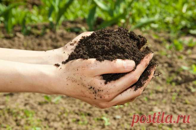Как вернуть почве плодородие? Органическое земледелие. Фото — Ботаничка.ru